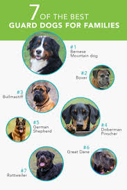 7 of the best guard dogs for families care com community