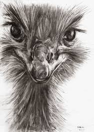 animals charcoal drawing on behance