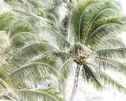 palm tree home decor palm trees minimal nature photography