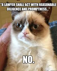 Lawyer Cat Meme - a lawyer shall act with reasonable cat meme cat planet cat planet
