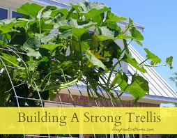 building a strong trellis grow cantaloupes melons squash