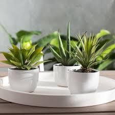 indoor plant indoor plants you ll love wayfair
