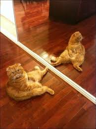 Looking In The Mirror Meme - 349 best orange cats my favorite images on pinterest adorable
