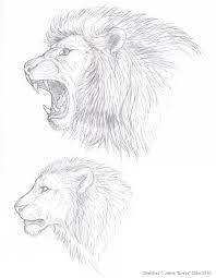 lion sketches by emryswolf on deviantart