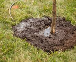 diy tree watering with tree watering system