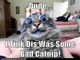 Trip Meme - bad trip lolcats lol cat memes funny cats funny cat