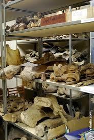 ice age beast bones u0026 yakutsk mammoth museum siberia russia