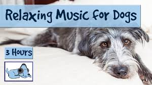 3 hours of relaxation music for dogs calm them during firework