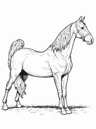 print u0026 download horse coloring pages