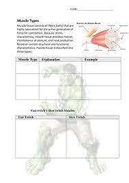 ks3 skeletal system by jamesjosephrogers teaching resources tes