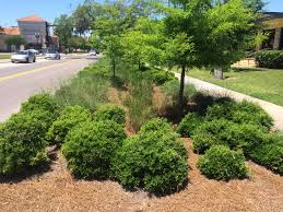 native plants fort myers kevin songer florida low impact development a native plant