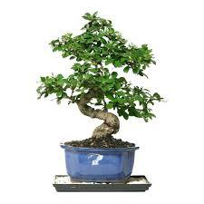 live indoor plants live indoor plants house for sale online near me hanging