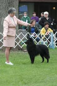 belgian sheepdog club of america national specialty 2005 bsca national specialty breed