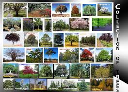 different types of trees research n collection of different types of trees this is flickr