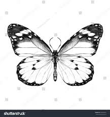 butterfly open wings top view symmetrical stock vector 597853676