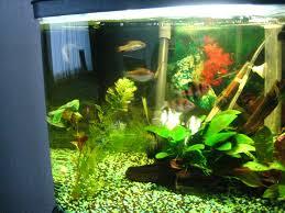 23 best aquarium images on fish tanks aquarium ideas