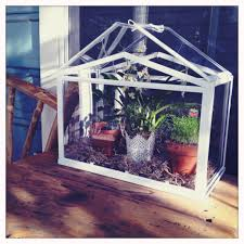 Ikea Krydda Vaxer Usa Our Ikea Greenhouse With Chives Jalapeños And My Oncidium