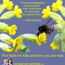 bee facts and how can help