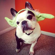 pets in star wars costumes are the best starwars com