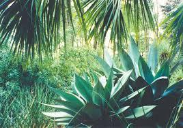 houston native plants houston u0027s 5 best public gardens houstonia