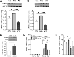 canula fiore activation of k by metformin improves withdrawal signs