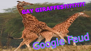giraffes are youtube