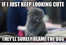 Evil Cat Meme - yet an evil cat very funny pics