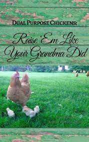 Backyard Chicken Raising by 1084 Best Raising Chickens In Your Back Yard Images On Pinterest