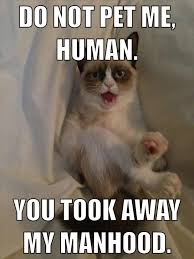Grumpy Cat No Memes - the best of grumpy cat 70 pics grumpy cat cat and animal