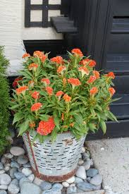 Front Porch Decor Ideas Fall Porch Decorating Ideas Clean And Scentsible