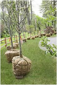 backyards cozy raised landscape bed large colorado blue spruce