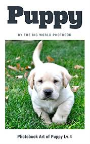 Dog Cat Meme - puppy the big world photobook photo book dog dog photography the