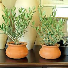 low light plants for bedroom 12 best plants that can grow indoors without sunlight indoor