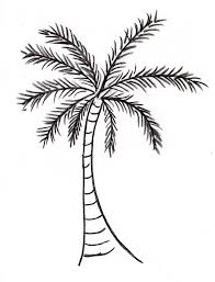coloring pictures of a palm tree palm tree drawing 2510