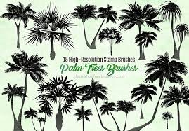 15 palm trees brushes for creating tropical themed designs