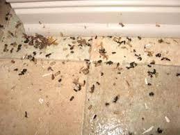 fourmis cuisine comment se debarrasser des fourmis la comment se debarrasser des