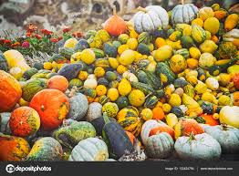 Small Pumpkins Many Small Pumpkins For Halloween Party For Sale At The