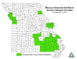 emerald ash borer map mdc invasive emerald ash borer continues to threaten missouri s