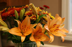 fall flower arrangement isolated stock photos images pictures