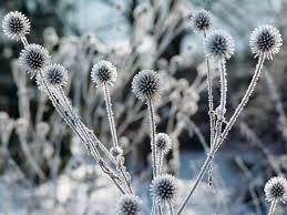 winter gardening ideas hgtv