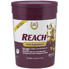 best joint supplement best joint supplements for horses reach joint supplement