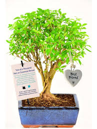 bonsai trees meaning health healing