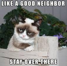 Grumpy Cat Meme Clean - clean grumpy cat memes image memes at relatably com
