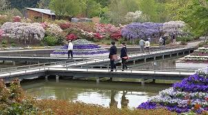 tochigi travel ashikaga flower park