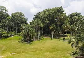 Largo Botanical Garden Singapore Botanic Gardens National Orchid Garden A Unesco