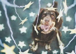 australian shepherd las vegas 2048x1461 free desktop wallpaper downloads wisteria download