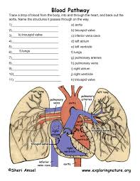 Anatomy Of Human Heart Pdf Pulmonary Circulation Through Heart And Lungs Advanced
