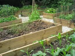 the lasagna vegetable beds in june the blooming garden