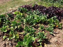 garden layouts for vegetables some best fertilizer for vegetable garden ideas home design ideas