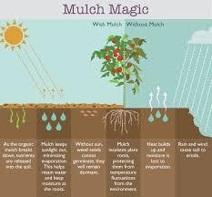 how to kill weeds naturally fix com